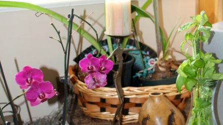 Plants and orchids arrangement on my kitchen counter.