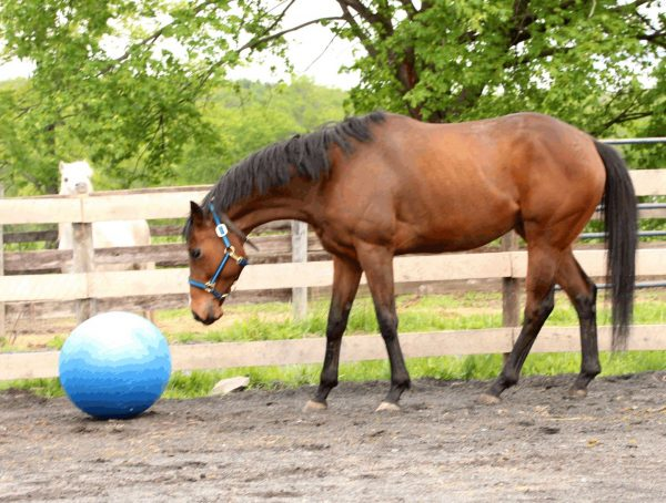 Manny is curious about the blue ball.